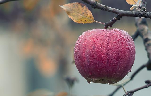 Sposoby na długotrwałe przechowywanie jabłek